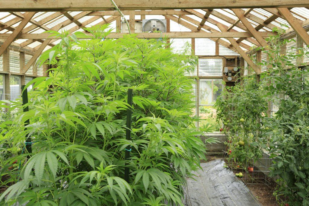 Cannabis Business Insurance image